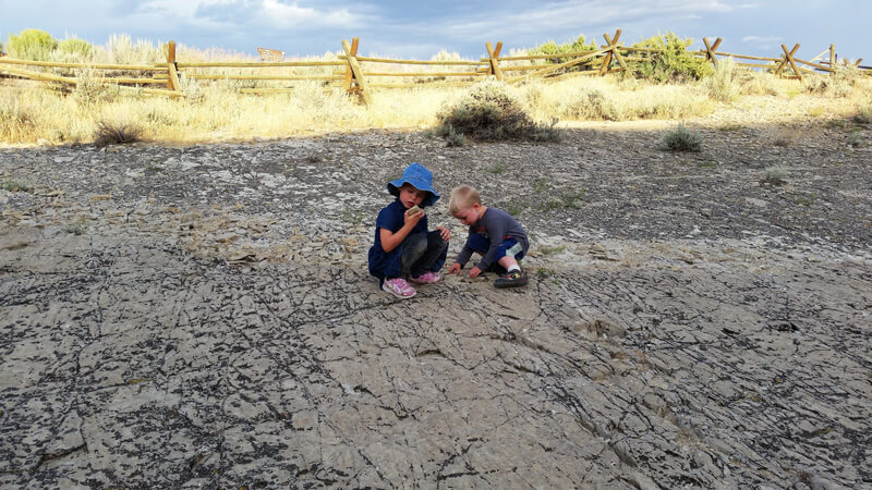 exploring for fossils