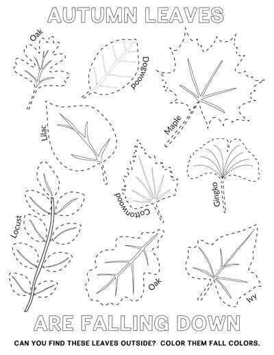 autumn leaves tracing page
